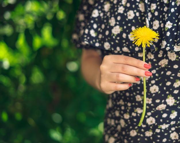 Mani femminili che tengono fiore giallo