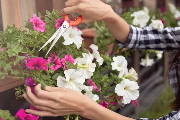 Mani femminili che potano le piante in vasi da fiori all'aperto.