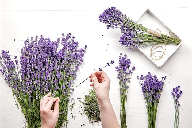 Mani femminili smistamento di fiori per fare un bouquet di fiori di lavanda freschi, tavolo bianco, piatto laici
