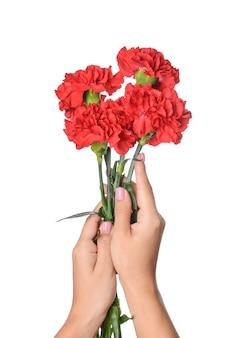 Mani femminili con bellissimi fiori di garofano su bianco