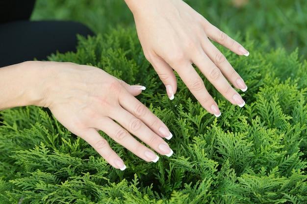 Mani femminili con unghie perfettamente curate su sfondo naturale di fogliame sempreverde, manicure.