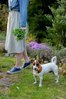 La femmina tiene le barbabietole vicino a un cane in un giardino in primavera