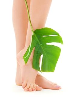 Gambe femminili con foglia verde su bianco