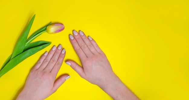 Manicure femminile su uno sfondo luminoso. sfondo giallo con tulipani. posto per un'iscrizione. banner.