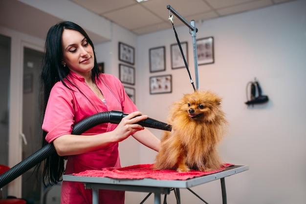 Pelliccia di cane asciutta del toelettatore dell'animale domestico femminile con un asciugacapelli
