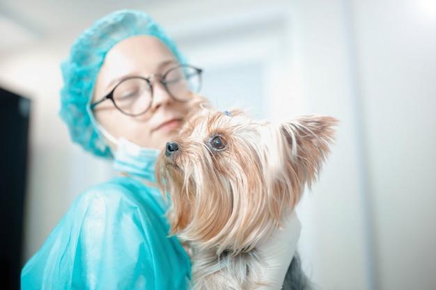 Veterinario femmina in uniforme con cane yorkshire terrier