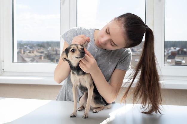 Il veterinario femminile esamina un piccolo terrier di giocattolo del cane