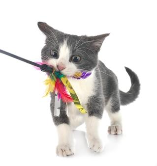 Gatto selvatico isolato su bianco Foto Premium