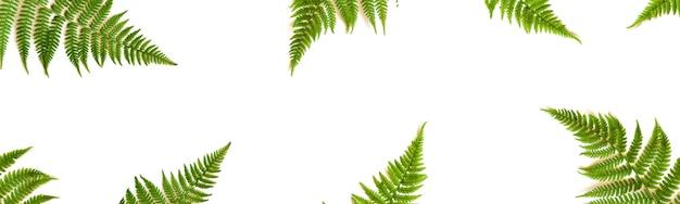 Cornice di foglie di felce isolata su sfondo bianco vista dall'alto. stile piatto. bandiera.