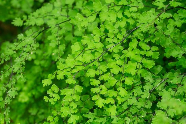 Felci o muschi sulla foresta