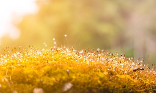 Felci o muschi sul tronco e gocce di rugiada nella foresta con la luce solare