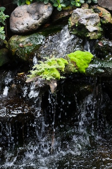 Felci, arroccato sulle rocce nella cascata.