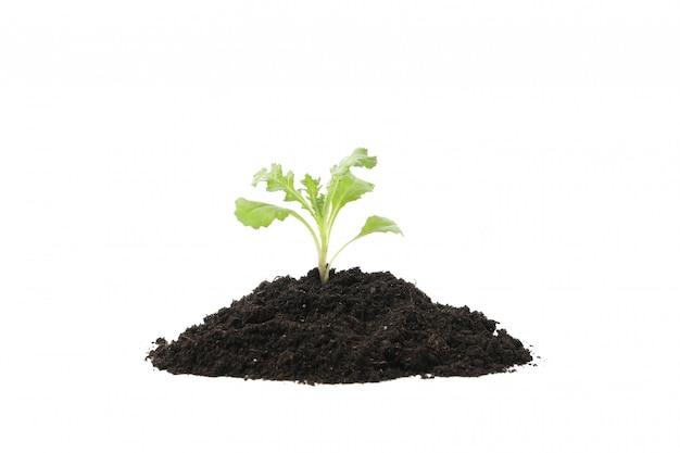 Terreno fertile con il germoglio verde isolato su bianco isolato