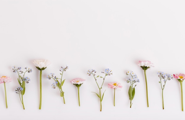 Festosa primavera selvaggia estate fiori, margherite, composizione di nontiscordardime sullo sfondo bianco. vista dall'alto, piatta. copia spazio. compleanno, mamma, san valentino, donna, concetto di giorno delle nozze.