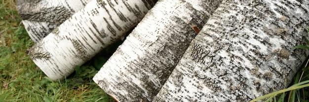 Alcuni tronchi di betulla segati sull'erba