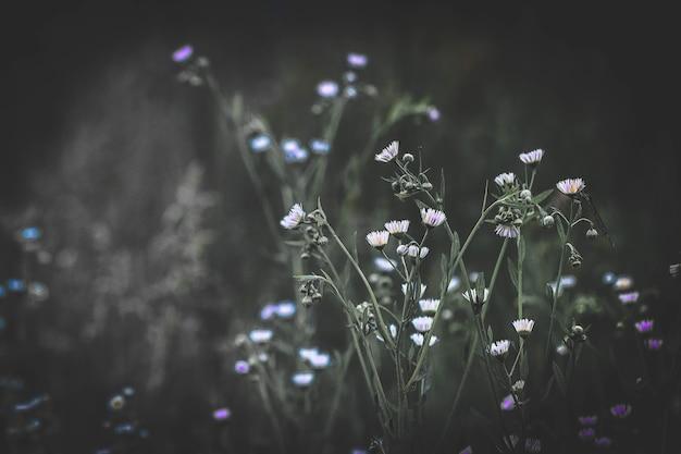 Alcuni piccoli fiori con uno sfondo sfocato con un filtro scuro