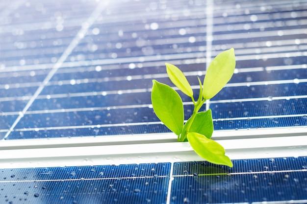 Un germoglio di ficus germoglierà tra i pannelli solari.
