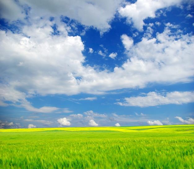 Campo sullo sfondo del cielo azzurro