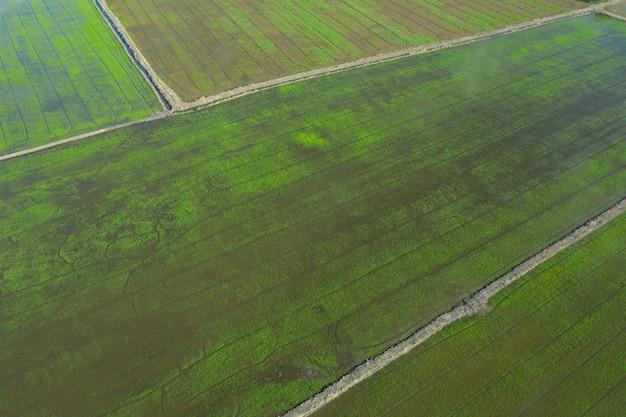 Sfondo del campo, paesaggio vista dall'alto, natura