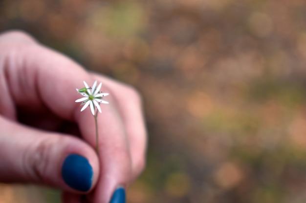 Fiore di campo nella mano di una donna