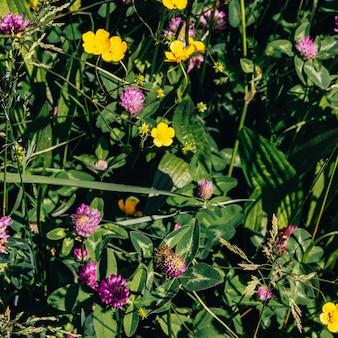 Sfondo di fiori di campo. concetto di amante delle piante