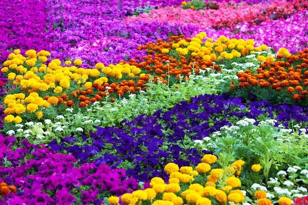 Campo di fiori di diversi colori