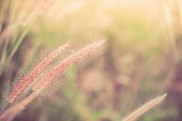 Campo di messa a fuoco morbida del fondo della natura del fiore dell'erba