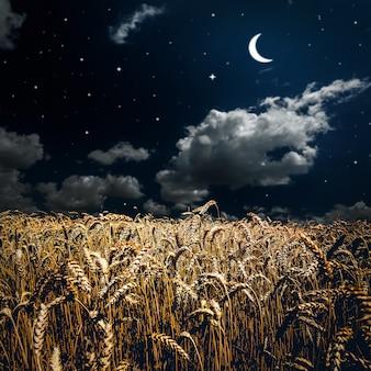 Campo d'erba. grano di prato sotto il cielo
