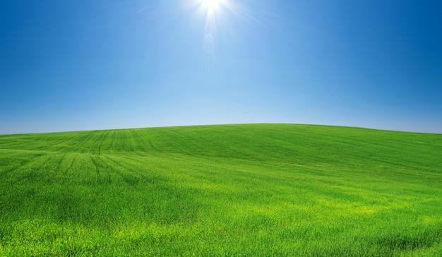 Campo d'erba e cielo perfetto