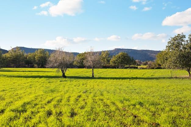 Campo di erba e alberi alla luce del sole