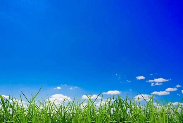 Isolamento dell'erba verde del campo sugli sfondi del cielo