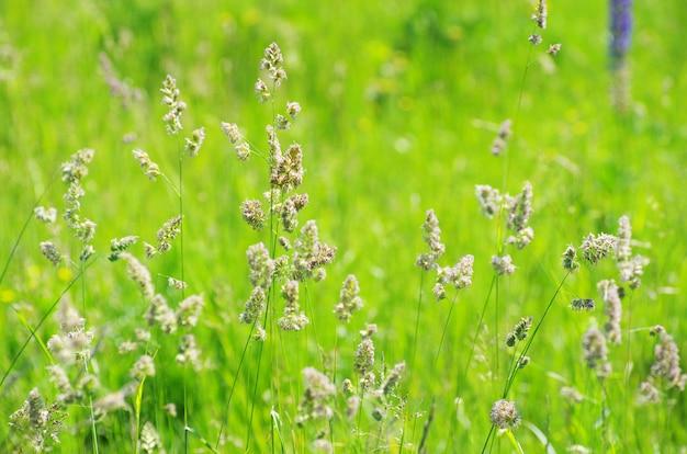 Fondo del paesaggio dell'erba verde del campo