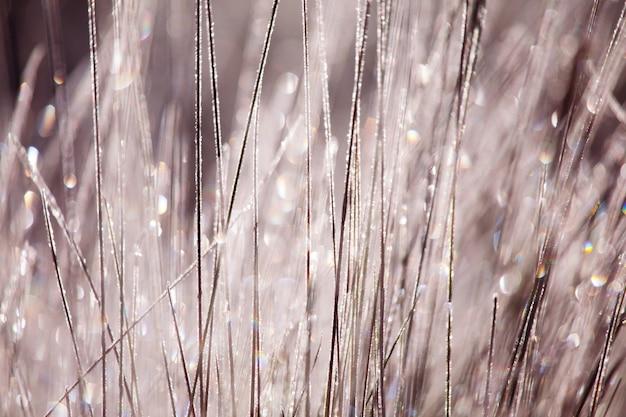 Paesaggio di campo nella stagione primaverile