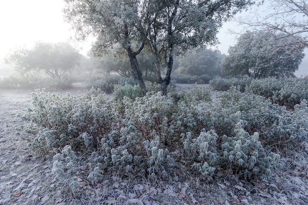 Paesaggio del campo completamente congelato dal ghiaccio in inverno, piante con rugiada e luce dell'alba. spagna