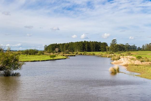 Paesaggio del campo con il rimboschimento del flusso e dell'eucalyptus in federacion entre rios argentina