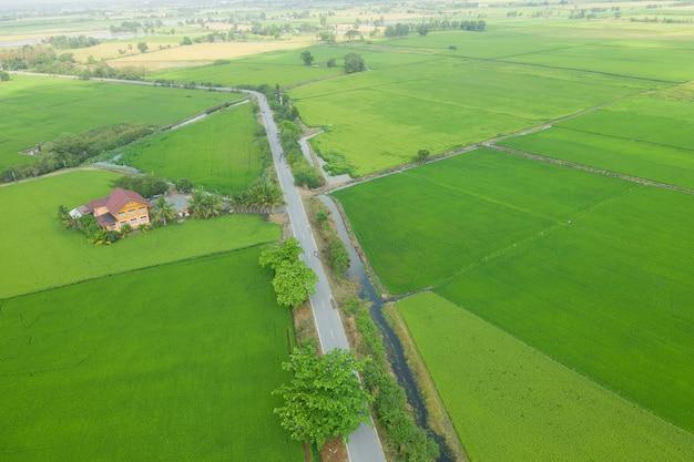 Campo di riso con natura modello paesaggio verde