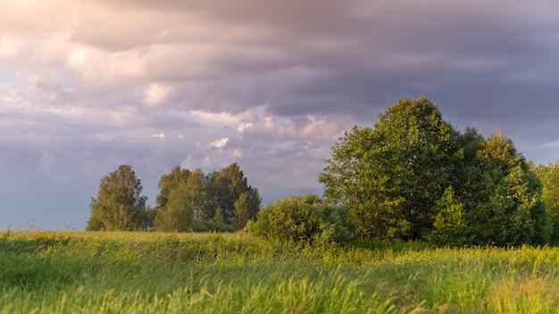 Un campo con erba verde e pochi alberi al tramonto.
