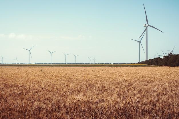 Campo con girasoli ed energia ecologica, turbine eoliche