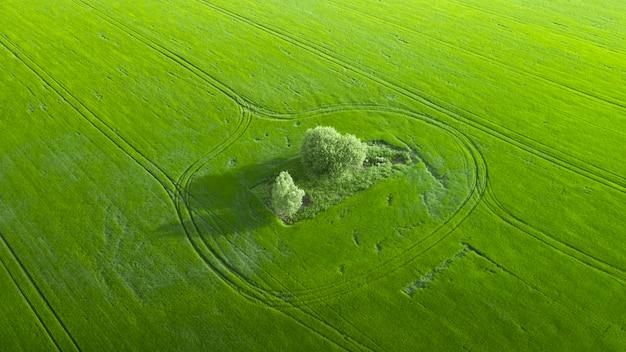 Campo di grano verde giovane e piste tecnologiche. meraviglie del campo agrario. vista del drone.