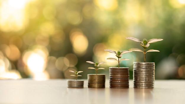Finanza ed economia con crescita dell'albero dei soldi concetto di crescita finanziaria, economia e gestione del budget.