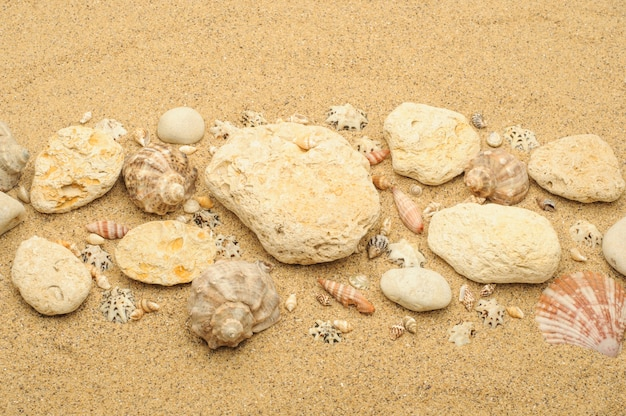 Spiaggia di sabbia fine con scogli e conchiglie sotto il sole estivo