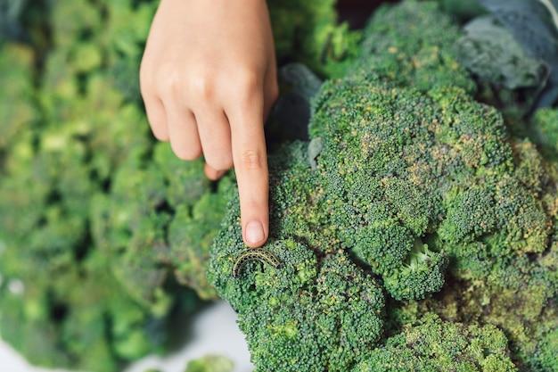 Il dito indica il bruco della farfalla bianca pieris brassicae sui broccoli.