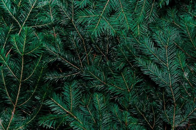 Sfondo albero di abete. vista dall'alto di rami di abete rosso