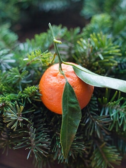 Abete rami e mandarino con foglia, concetto di natale.