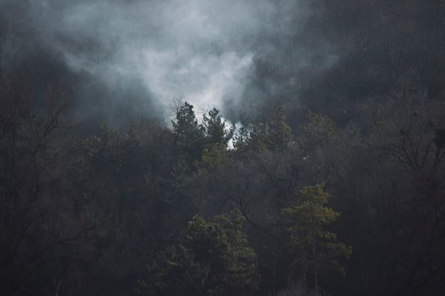 Fuoco nella foresta fumo sopra gli alberi abete verde e fumo grigio