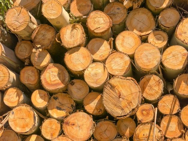 Fondo di legno di struttura dell'eucalyptus del fuoco