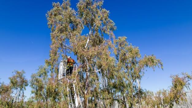 Pompiere che fa salvataggio dell'albero sopra il camion della scala all'aperto