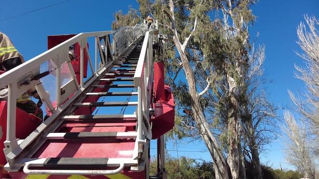Pompiere che fa salvataggio dell'albero sopra il camion della scala.