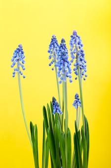 I primi fiori sono viola nella stagione primaverile Foto Premium