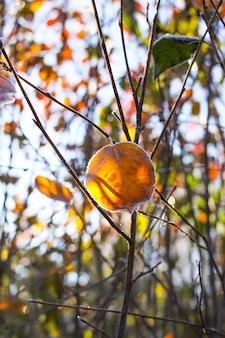 Primo gelo nel parco autunnale. la mattina presto di novembre. rami e foglie bagnati in brina